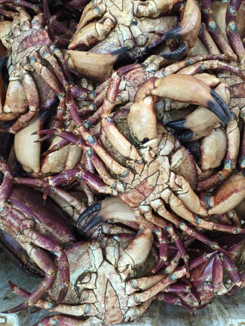 Jaiba, centolla crab Chiloe